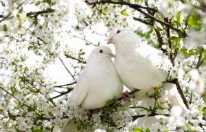 colombe de la paix, liberté